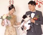 Chó đạp cô dâu khỏi ảnh cưới