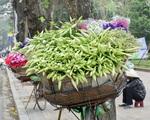 Hoa loa kèn đầu mùa rợp phố Hà Nội, rẻ bằng một nửa năm ngoái nhưng không mấy ai mua