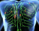 Cách kích thích 8 vùng bạch huyết giúp cơ thể chóng khỏi đau ốm