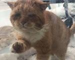 Chú mèo mặt khổ, bệnh tật toàn thân gõ cửa nhà dân xin ở nhờ giữa cơn bão tuyết