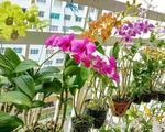 Hoa lan ngày càng hot nhờ giá bán  cao, cách chọn các loại cây hoa lan khỏe đẹp, dễ trồng, dễ sống