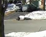 Chó chặn xe để cầu cứu khi chủ bị ngất trên đường