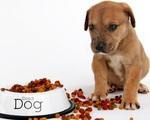 Chỉ ngồi nếm đồ ăn chó mèo xem có ngon không, lương 2,78 tỷ đồng