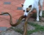 Cô gái ở Nghệ An chết thương tâm vì bị rắn chui vào giường cắn: Những loại cây không nên trồng vì thu hút rắn vào nhà