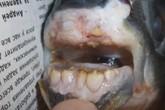 Sốc: Con cá có hàm răng giống như con người
