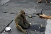 2 chú khỉ bị ngược đãi để mua vui cho khán giả gây phẫn nộ dư luận