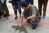 Choáng với người đàn ông dắt cá sấu đi dạo trên phố