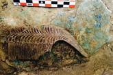 Phát hiện ngôi mộ 3.500 tuổi chứa đầy châu báu