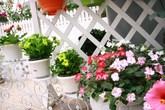 Ngỡ ngàng với nhà kính trồng hoa trên sân thượng Hà Nội