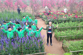 Vườn hoa, vườn đào Hà Nội tấp nập ngày cận Tết