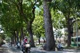 """Nhiều dự án ở Sài Gòn """"né"""" cây xanh"""