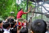 Rùng mình những vụ khách mất mạng vì thú dữ trong sở thú