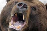 """Con gấu cắn đứt lìa tay bé 3 tuổi ở TP.HCM được """"nuôi chui"""""""