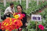 Những loại hoa nên mua để mang lại may mắn, tài lộc cả năm