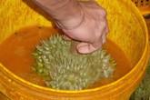 Hoảng vì nhiều thuốc cực độc được dùng để thúc chín và bảo quản trái cây