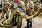 10 loài mãng xà khổng lồ nhất thế giới
