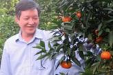 Trồng chưa đến 1ha cam, mỗi năm lãi 700 triệu đồng