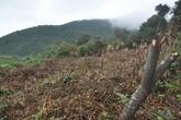 """Đà Nẵng: Những hình ảnh """"đau xót"""" trên bán đảo Sơn Trà"""