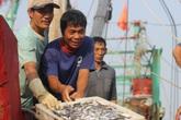 Biển Quỳnh Lưu cá đầy thuyền sau thảm họa nước thải Formosa