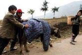 Giới trẻ thích thú vì băng tuyết, nông dân khốn đốn vì trâu bò chết hàng loạt
