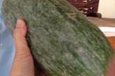 Bí xanh thơm, bí khổng lồ - đệ nhất rau sạch Việt Nam