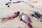 Vụ cá chết hàng loạt ở miền Trung: Ngư dân thiệt hại sẽ được Chính phủ hỗ trợ