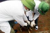Vụ 40 người bị chó dại cắn: Nghệ An tiêm phòng dại cho 2.200 con chó