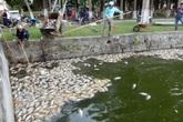 Đà Nẵng: Hàng tấn cá chết do thiếu ô xy?