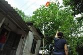 Thái Nguyên: Hàng chục hộ dân sống phấp phỏng dưới đường điện cao thế
