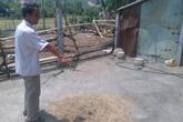 Thiếu nữ bị giết dã man ở Đà Nẵng