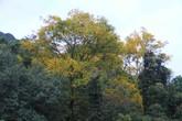 Ngắm vẻ đẹp bán đảo Sơn Trà mùa thay lá