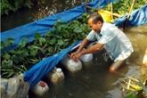 Lãi 10 triệu đồng nhờ nuôi lươn đồng trong can nhựa