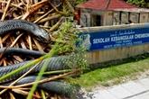 Malaysia có hơn 700 người bị rắn cắn vì lí do nắng nóng