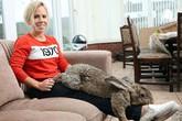 Kỳ lạ chú thỏ mới 18 tháng đã lớn ngang đứa trẻ 7 tuổi