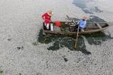 Những vụ cá chết do nhiễm độc xả thải gây sốc trên thế giới