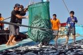 Bồi thường thiệt hại môi trường biển tại 4 tỉnh miền Trung: Chính phủ sẽ thành lập 4 đoàn thanh, kiểm tra