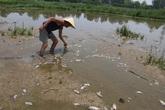 Quảng Nam phạt nhà máy kẽm xả nước thải khiến cá chết hàng loạt tại Đà Nẵng