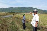 Vụ 57ha lúa bị ngập úng ở Thanh Hóa: Dân bức xúc khi công ty bảo hiểm  từ chối trách nhiệm