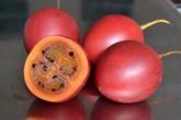 Cà chua độc lạ giá 1 triệu đồng/kg một thời giờ ra sao?