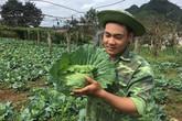 Chàng trai 18 tuổi, trồng 6.000m2 rau cải bắp, kiếm 100 triệu đồng/năm