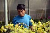 """Anh nông dân trồng lan """"đút túi"""" 1,5 tỷ sau vụ hoa Tết"""
