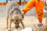 Hà Nội: Bé trai gần 2 tuổi bị chó nhà nuôi cắn nát mặt