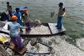 Hơn 20 tấn cá chết ở Hồ Tây là do nhiệt độ thay đổi đột ngột