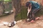 """""""Cẩu tặc"""" bị người dân vây đánh, cột chó vào cổ đã được bảo lãnh về trị thương"""