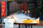 """Cá tra dầu """"khủng"""" chưa từng thấy xuất hiện ở thành phố Lào Cai"""