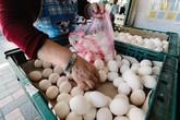 Không rửa tay sau khi sờ vào trứng, người phụ nữ bị hoại tử 90% ruột