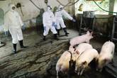 10 tỉnh có dịch tả lợn châu Phi: Hàng loạt giải pháp phòng, chống
