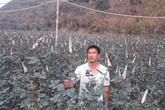"""Rời thủ đô lên phố núi trồng hoa hồng, chàng trai Hà thành """"rinh"""" gần 1 tỷ mỗi năm"""