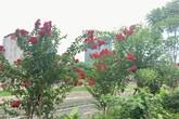 """Chiêm ngưỡng vẻ kiêu sa của loài hoa dễ """"gây thương nhớ"""" ở Hà Nội"""