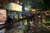 Hà Nội: Mưa dông khiến cây xanh đổ gãy đúng giờ tan tầm, 2 người bị thương